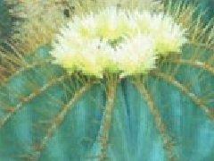 矮牵牛花的繁殖方法图片